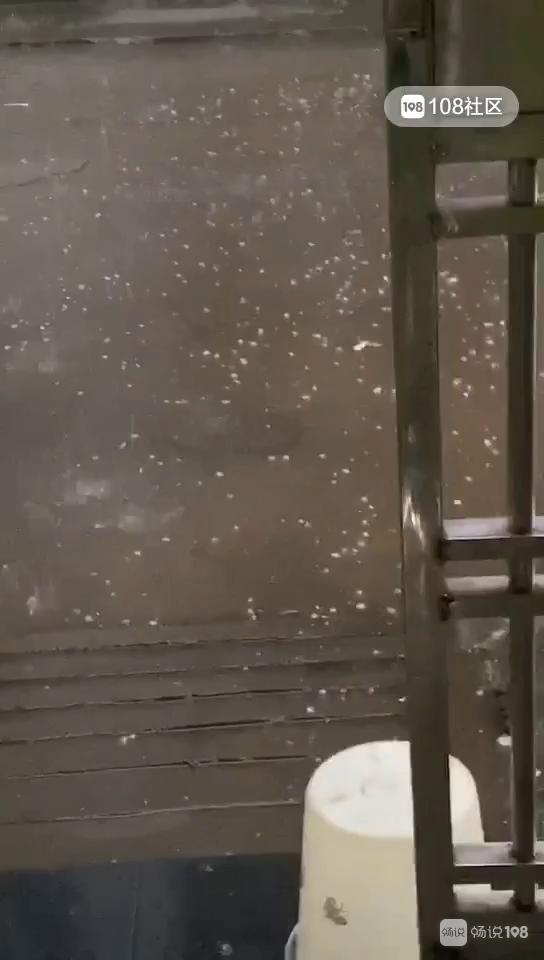 刷屏了!绍兴刚刚又下冰雹,块头老大砸得生疼