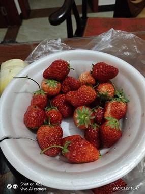 草莓吃的拉肚子了。