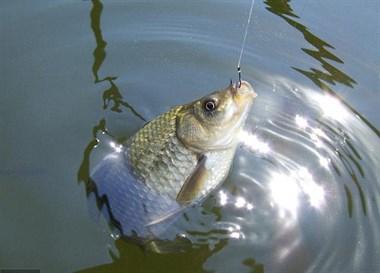 冬季鱼口轻,调钓宜钝不宜灵,原因就在这