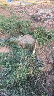 有人竟在城改拆迁地动土!挖机出动,一大片绿全没了