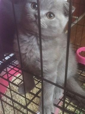 嵊宠物猫狗品种多