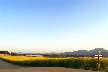 天气晴好,新昌这几条绝美赏花路线,又可以走起来了
