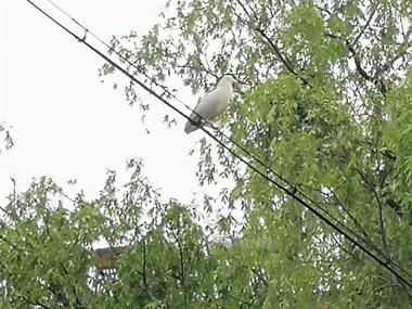 谁知道这是什么鸟?
