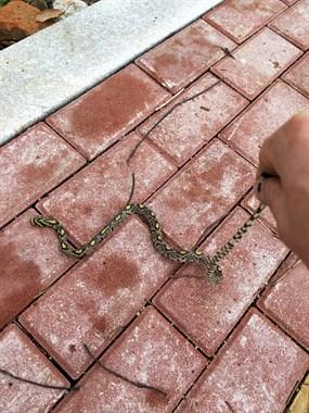 早遇小蛇??友