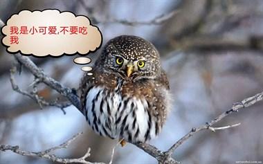 """为给母亲治头痛?金庭儿子买""""大头鸟""""炖了!结果…"""