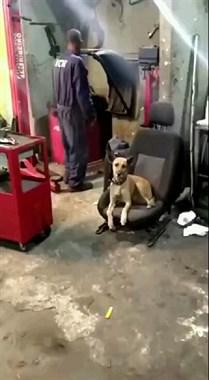 社友家的狗都会说广东话!你能听出来说的是什么吗?