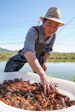 社友买到5元/斤!德清宁爱吃的小龙虾,今年价格大跳水!