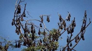 疫情通报!果园惊现300多蝙蝠尸体,可怕一幕吓坏村民