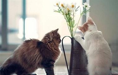 有这4种表现的人,家里必定有猫,你占了几种?
