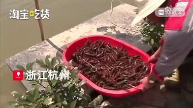 杭州賣的小龍蝦來自德清?價格噶便宜,有人買10斤回家燒