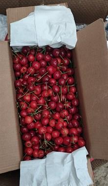 张家港本地樱桃,塘市附近免费送货上门!