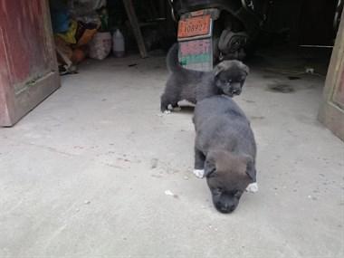【转卖】狗