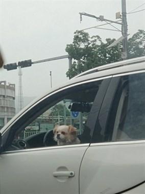 """德清街头奇葩一幕!这辆车近看不对劲,连狗都能""""开车""""了?"""