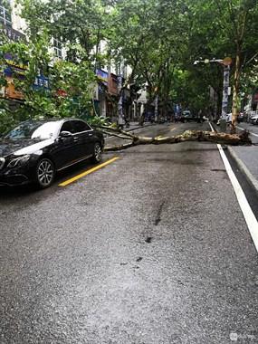 社友实拍!车子、行人都遭殃!景德镇这些地方树直接砸向车子
