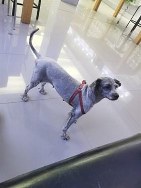 【转卖】免费送小狗一只 支持回访的可以领养