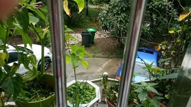 谁给我出个主意?小区垃圾桶放在我家窗口对面,太臭了