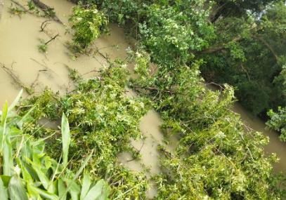 海宁这地方树被拦腰折断,河面上全是树枝,无人管!