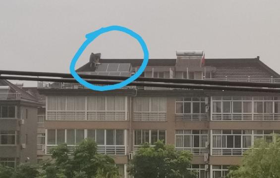 一声巨响!家里电都跳闸了,邻居屋顶被雷击中…