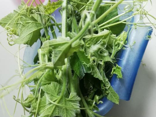 好东西!菜园里随处可见的小菜,竟有这么多功效!