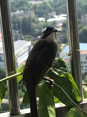 兴奋!第一次遇到这稀奇事,家里阳台竟来了的新邻居