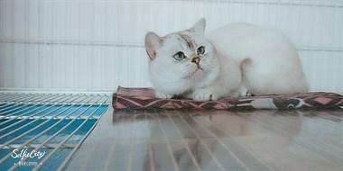【转卖】宠物活体配种 洗护 食用品 健康咨询