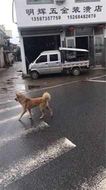 【求购】求购二手小货车