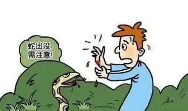 吓死人了!衢州一男子田里浇菜,惨遭剧毒五步蛇攻击…