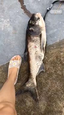 辽弯水库放水了!现场嘎热闹,有社友捞到十几斤大鱼