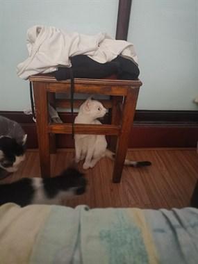 小白猫有人想要吗?