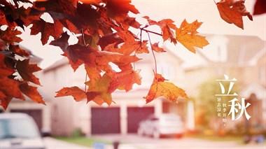 今日立秋啦