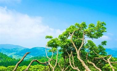 """来离你最近的""""中国森林氧吧""""避暑吧"""