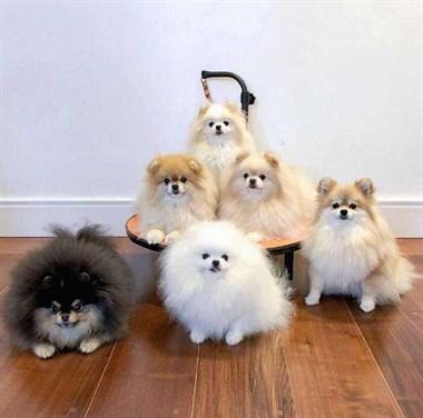 护卫、宠物、狗