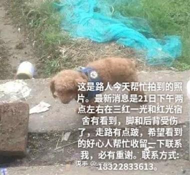 寻狗:10月21日蓝色牛仔背心的泰迪狗走失