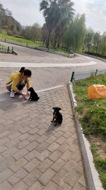 【转卖】卖小狗
