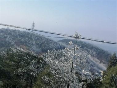 别羡慕下雪了!天台今天迎来冬天第一场雾凇!白茫茫一片