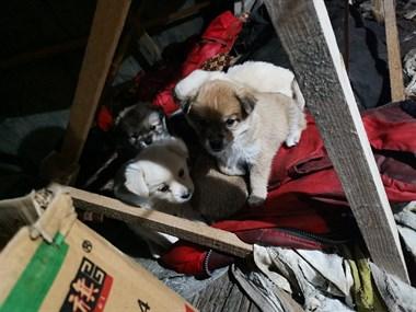 【轉賣】小狗免費送