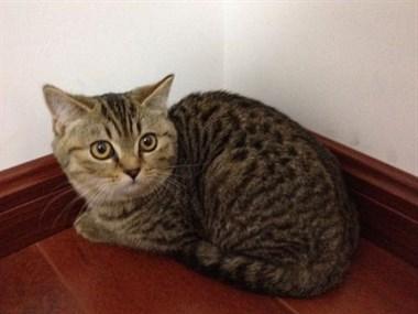 怀孕后婆婆把养了5年的猫送人了!想要回,却已经被吃了…