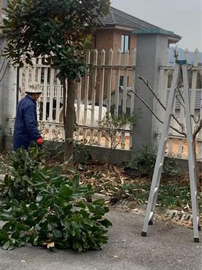 莫干山管理局退休高級園藝師為您的園子精心養護