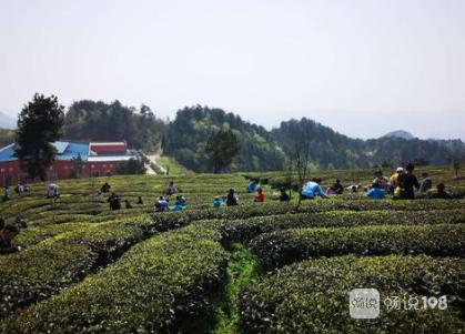 带着3个小学没毕业的去宁波采茶!路都找不到差点没被卖了