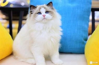 家养繁殖世界名犬名猫。微18758409955