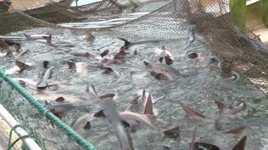 嵊州钓鱼界都轰动了!浦口可以钓到3亿年前的鸭嘴鲟