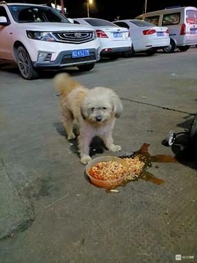 寻找一只家养西洋狗!虽然不名贵,但养了很久有感情了