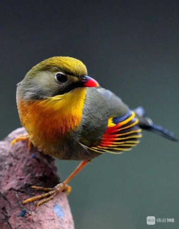 一只就判刑!这些鸟升级为重点保护动物,新昌人别乱抓!