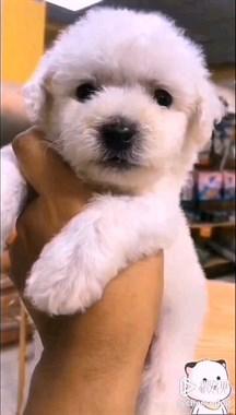 家养繁殖世界名犬名猫微18758409955
