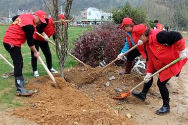 温岭城南镇又见红马甲义务植树