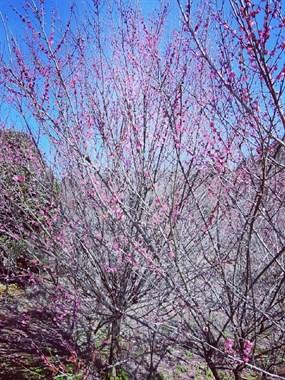 春来百花开,愿你好运来。