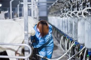 红星美羚——营养好奶,品质如一,为国人健康护航