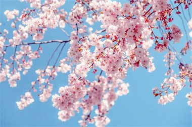 红星美羚育儿经:春季到、万物生,可别错过「倍速生长期」哦