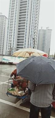 老物件!袁花活禽市场惊现拔秧油布伞,你见过吗?