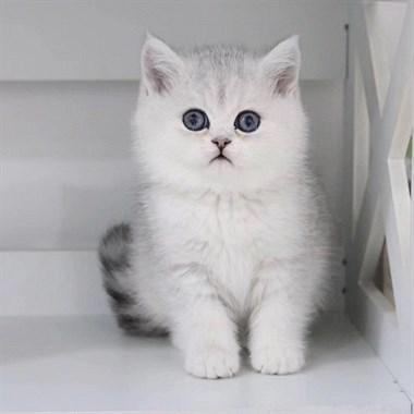 家养繁殖各类世界名犬名猫,咨询微信13806632889